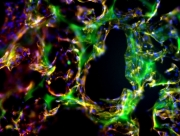 Success of engineered tissue depends on where it's grown